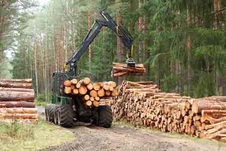 Forest Equipment Asset Finance